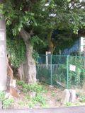 Dscf0986