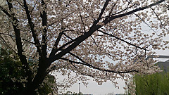 20140402_125512_android