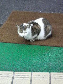 ブックス805<br />  の招き猫