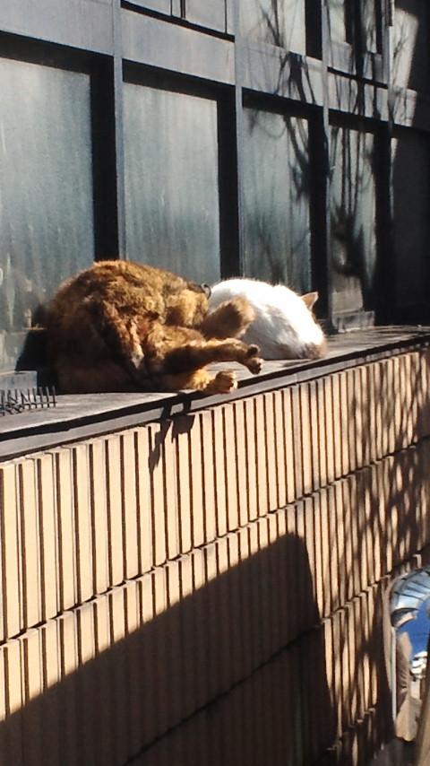 けさの猫道グループ